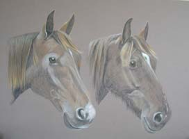 Megan and Fiva - portrait of two horses - welsh cob and Anglo Arab