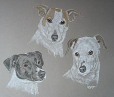 3 jack russels - Toby Kelly and Dan
