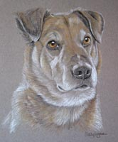 cross breed - portrait of Indy