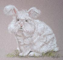 white angora buck rabbit, portrait of Frosty Colin Powel of Bourne