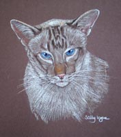 chocolate point tabby siamese cat - Sequoia