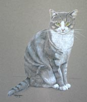 pastel drawing of grey and white cat - full body portrait of Barney
