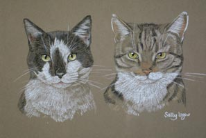 double cat portrait - Zebedee and Dougal