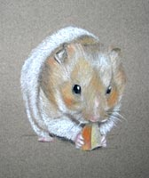 hamster eating apple - Ginger's Portrait