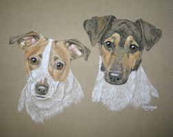jack russells - portrait of Pip and Jax