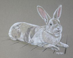 grey and white rabbit portrait - charlie